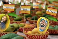 Virat Shikhar Are Now Aam Cricket Fever Grips Mango Growers Back Home
