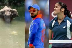 Virat Kohli Sunil Chhetri Saina Nehwal Reacted On Death Of Pregnant Elephant