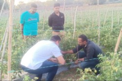 Ms Dhoni S Farm Vegetables Set To Be Sent To Abroad